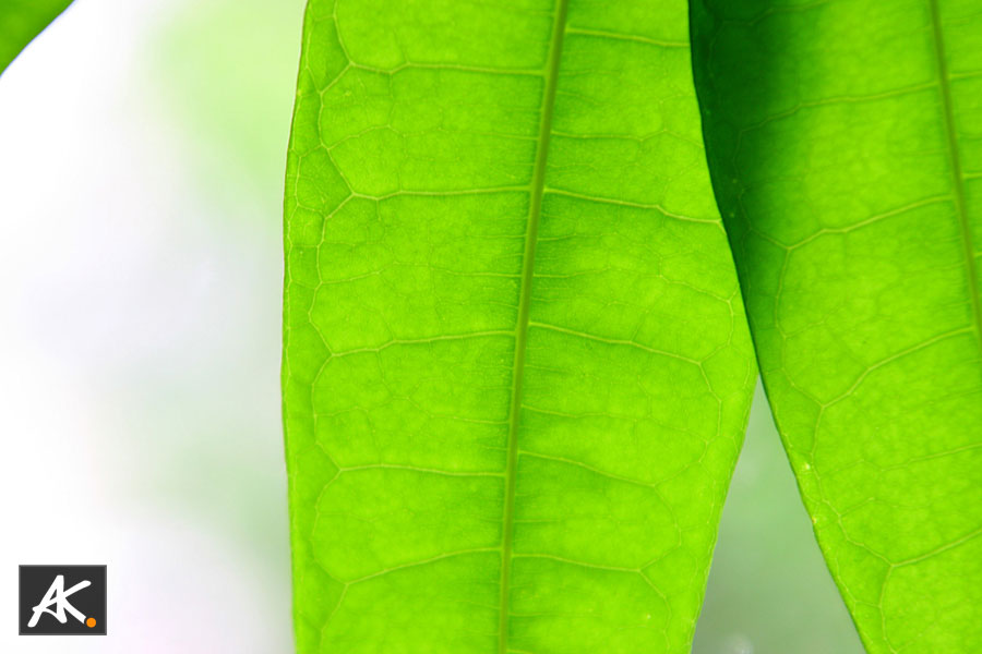 green Leafes