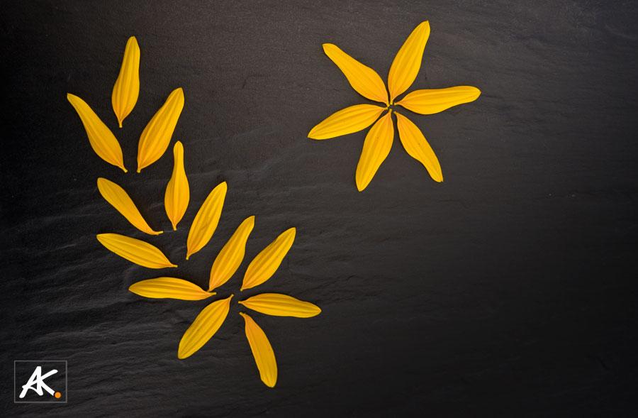 Sunflower-Leaves0